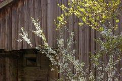 покинутый амбар на саде коттеджа в сельской сельской местности юга Стоковое фото RF