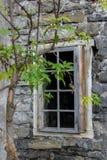 Покинутый дом с молодым деревом Стоковые Изображения