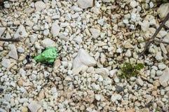 Покинутый зеленый поезд игрушки Стоковая Фотография RF