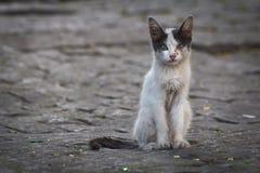 покинутый кот Стоковая Фотография RF