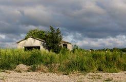 Покинутый перерастанный амбар Стоковая Фотография RF