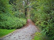 Покинутый путь прогулки в глубине английского парка стоковое фото
