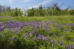 Покинутый сад Стоковые Фотографии RF