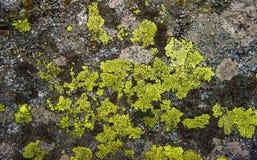 Покинутый старый бетон покрытый с мхом в макросе леса, clo Стоковое Изображение RF