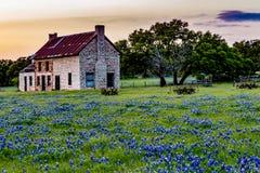Покинутый старый дом в Wildflowers Техаса Стоковое Изображение