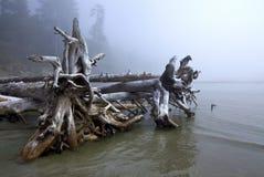 Покинутый тимберс, Канада Стоковое Изображение RF