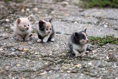 3 покинутых котят Стоковые Изображения