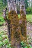 покрасьте желтый цвет вала мха Стоковые Фото