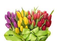 покрасьте желтый цвет тюльпана красной весны fuschia цветков большой Свежие тюльпаны весны с падениями воды Стоковые Изображения RF