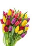 покрасьте желтый цвет тюльпана красной весны fuschia цветков большой Букет цветенй весны resh Стоковая Фотография RF