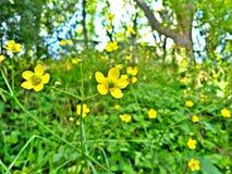 покрасьте желтый цвет Стоковая Фотография