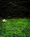 покрасьте изображение компьютера комбинации цвета произведенное цветком гармоничное головное стоковые фотографии rf