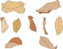 Покрасьте коричневую сухую краску лист бесплатная иллюстрация