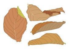 Покрасьте коричневую сухую краску лист иллюстрация штока