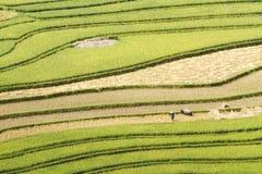 Покрасьте кривые сбора на террасных полях Стоковые Фотографии RF