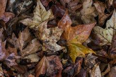 Покрасьте мертвые листья в земле осени стоковые фото