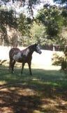 Покрасьте лошадь и пони Стоковые Изображения