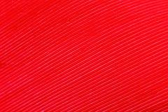 Покрасьте перо, деталь макроса каждой тонкой линии Стоковое фото RF