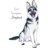 Покрасьте породу чабана собаки эскиза восточно-европейскую бесплатная иллюстрация