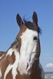 Покрасьте портрет головки лошади Стоковая Фотография