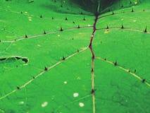 покрасьте природу листьев иконы экологичности зеленую органической терний Стоковое Изображение RF