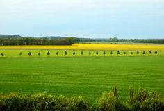 Покрасьте фотографию весны полей рапса и зерна Стоковая Фотография