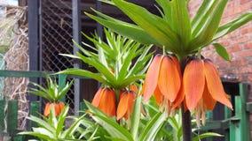 покрасьте цветки померанцовым стоковое фото rf