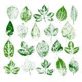 Покрасьте штемпеля различных листьев установленный Стоковое Фото
