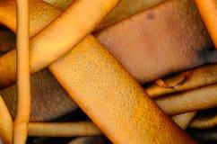 Покрашенная апельсином деталь морской водоросли стоковые фото