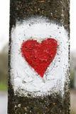 покрашенная влюбленность сердца Стоковое фото RF