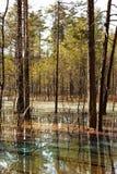 покрашенная вода валов сосенки Стоковая Фотография RF