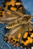 Покрашенная дама Бабочка Макрос Фотография Стоковые Изображения