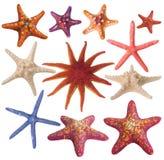 покрашенная звезда моря установленная Стоковое фото RF
