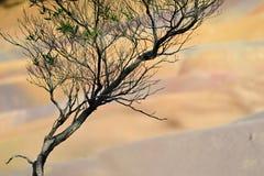 7 покрашенная земля Стоковые Фотографии RF