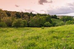 покрашенная иллюстрация руки сделала лето природы Луг ландшафта на заходе солнца Стоковая Фотография