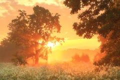 покрашенная иллюстрация руки сделала лето природы Стоковое фото RF