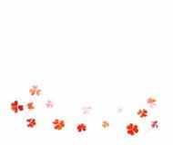 Покрашенная картина на белом shamrock лист предпосылки Стоковые Изображения