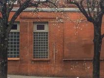 Покрашенная кирпичная стена с окнами стеклянного блока фланкированными деревьями начиная зацветать в предыдущей весне стоковые фото