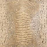 Покрашенная косточкой выбитая текстура задней кожи аллигатора стоковая фотография rf