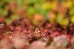 Покрашенная мозаика листьев Стоковые Фото