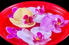 Покрашенная орхидея цветет, mauve, желтый цвет, пинк, пурпур, в воде Стоковые Изображения RF