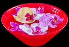 Покрашенная орхидея цветет, mauve, желтый цвет, пинк, фиолетовый в красном шаре с водой Стоковые Изображения RF