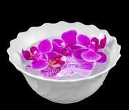 Покрашенная орхидея цветет, mauve, пинк, фиолетовый в белом шаре с водой Стоковое Изображение