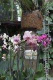 Покрашенная орхидея Стоковая Фотография
