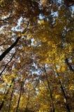 покрашенная осенью пуща листва падения Стоковая Фотография RF
