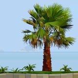 Покрашенная пальма на зеленой траве рядом с морем Стоковые Изображения RF