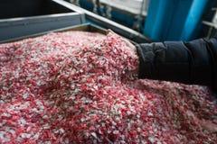 Покрашенная пластмасса раздробила мякиш на заводе для обрабатывать и стоковое изображение rf