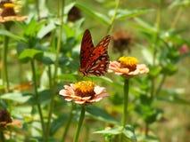 покрашенная повелительница бабочки стоковые фотографии rf