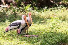Покрашенная портретом птица запаса Стоковое фото RF