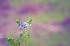 покрашенная предпосылка флористической Стоковое Изображение